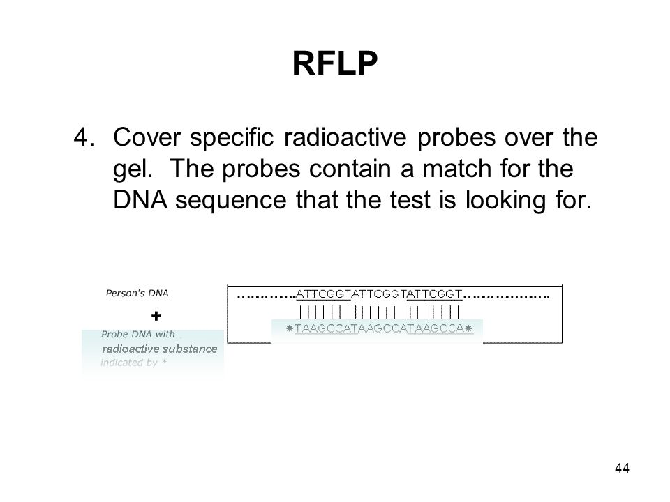 RFLP Cover specific radioactive probes over the gel.