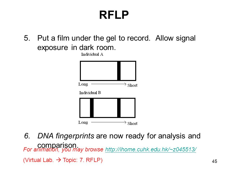 RFLP Put a film under the gel to record. Allow signal exposure in dark room. DNA fingerprints are now ready for analysis and comparison.