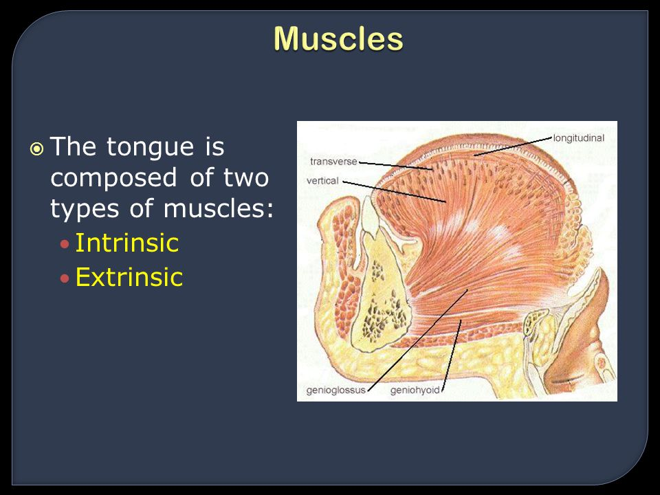Muscles The tongue is composed of two types of muscles: Intrinsic