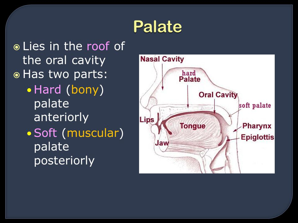 Palate Lies in the roof of the oral cavity Has two parts: