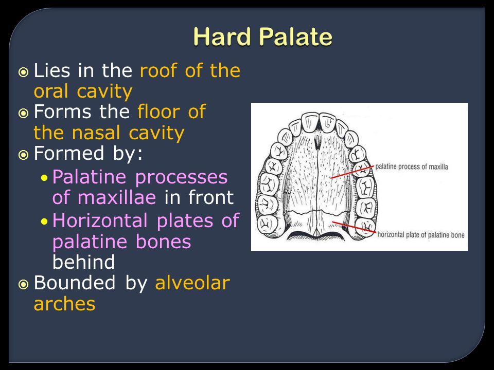 Oral cavity tongue palate ppt video online download for Floor of nasal cavity