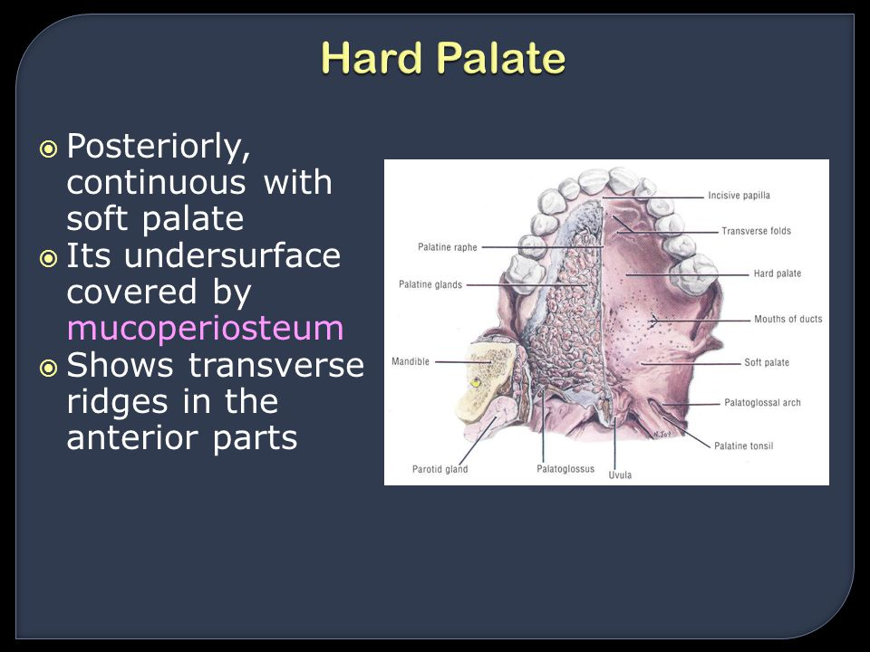Hard Palate Posteriorly, continuous with soft palate