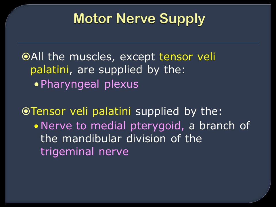 Motor Nerve Supply All the muscles, except tensor veli palatini, are supplied by the: Pharyngeal plexus.