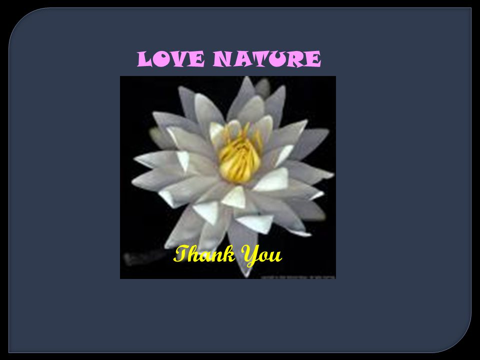LOVE NATURE Thank You