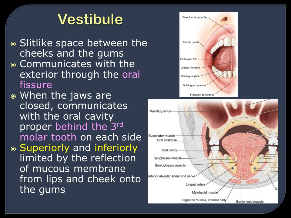 Vestibule Slitlike space between the cheeks and the gums