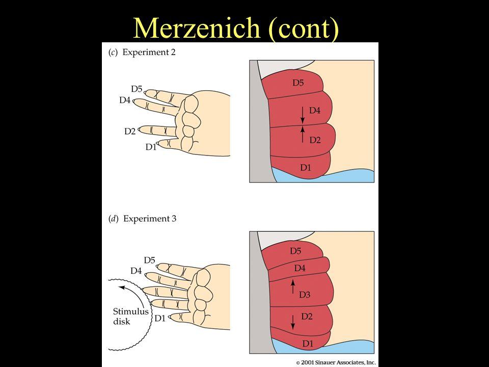 Merzenich (cont)