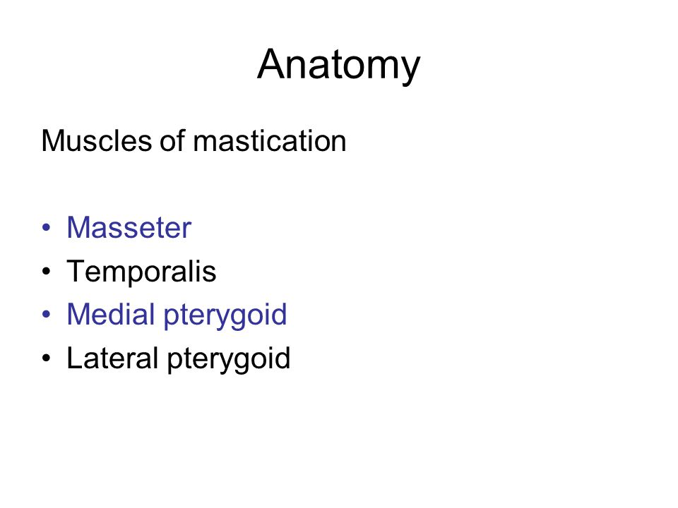 Anatomy Muscles of mastication Masseter Temporalis Medial pterygoid