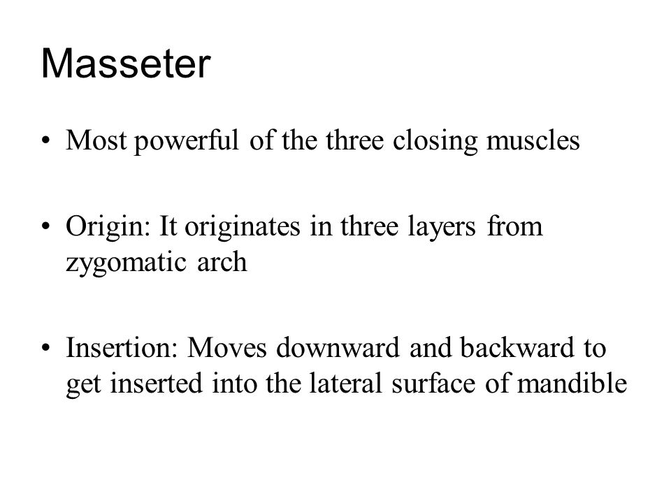 Masseter Most powerful of the three closing muscles