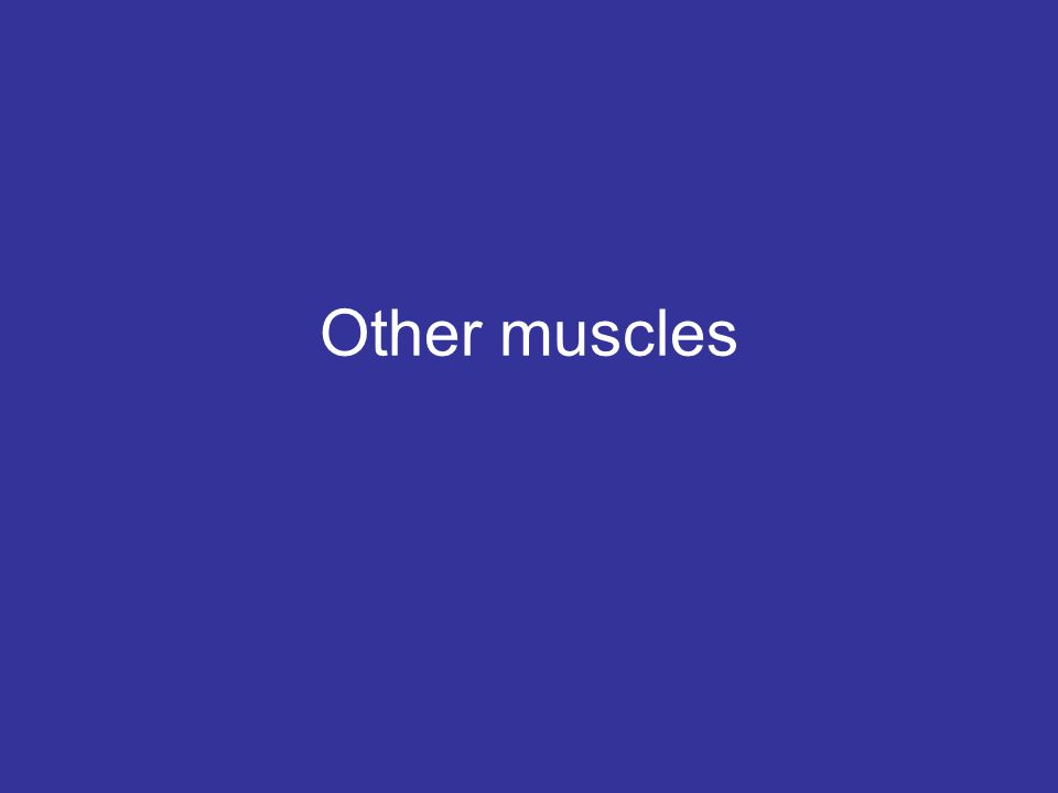Other muscles