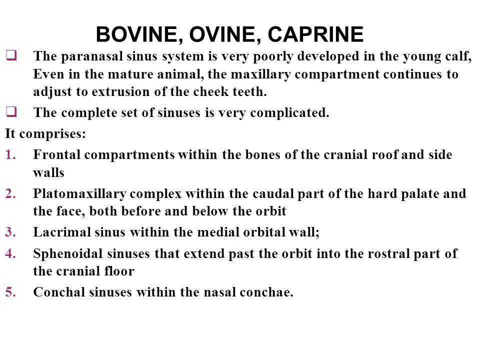 BOVINE, OVINE, CAPRINE