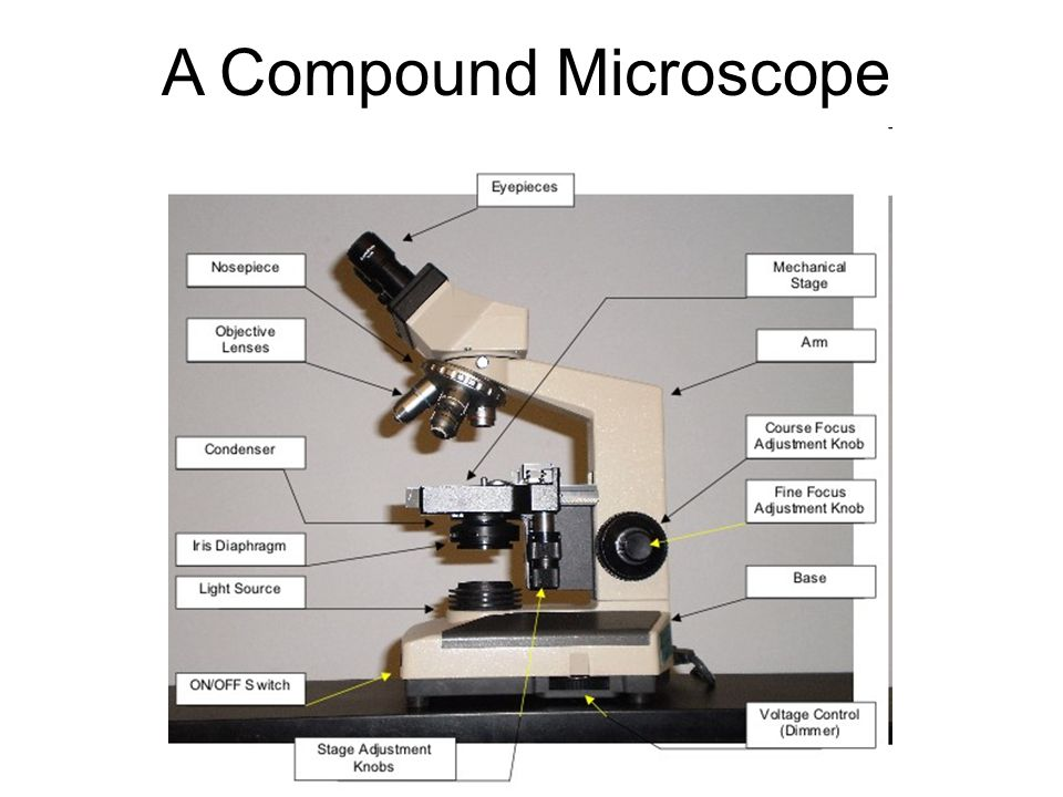 A Compound Microscope