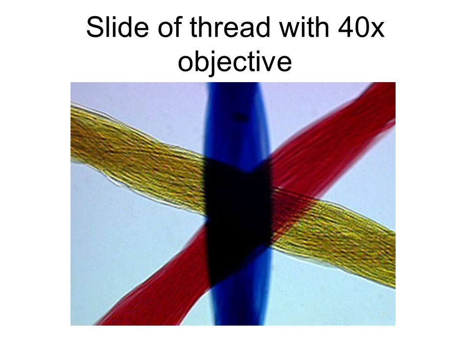 Slide of thread with 40x objective