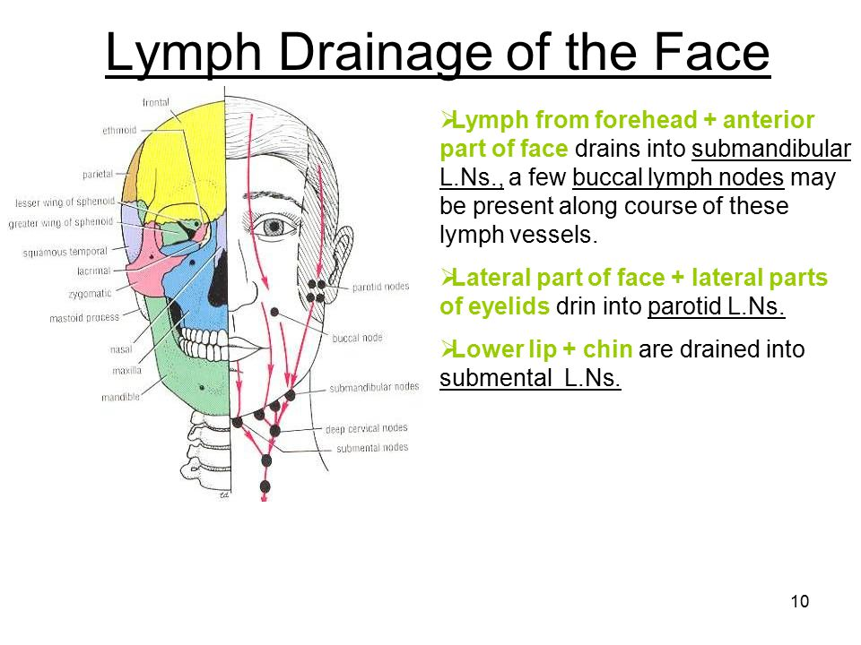 diagram of facial lymph nodes images