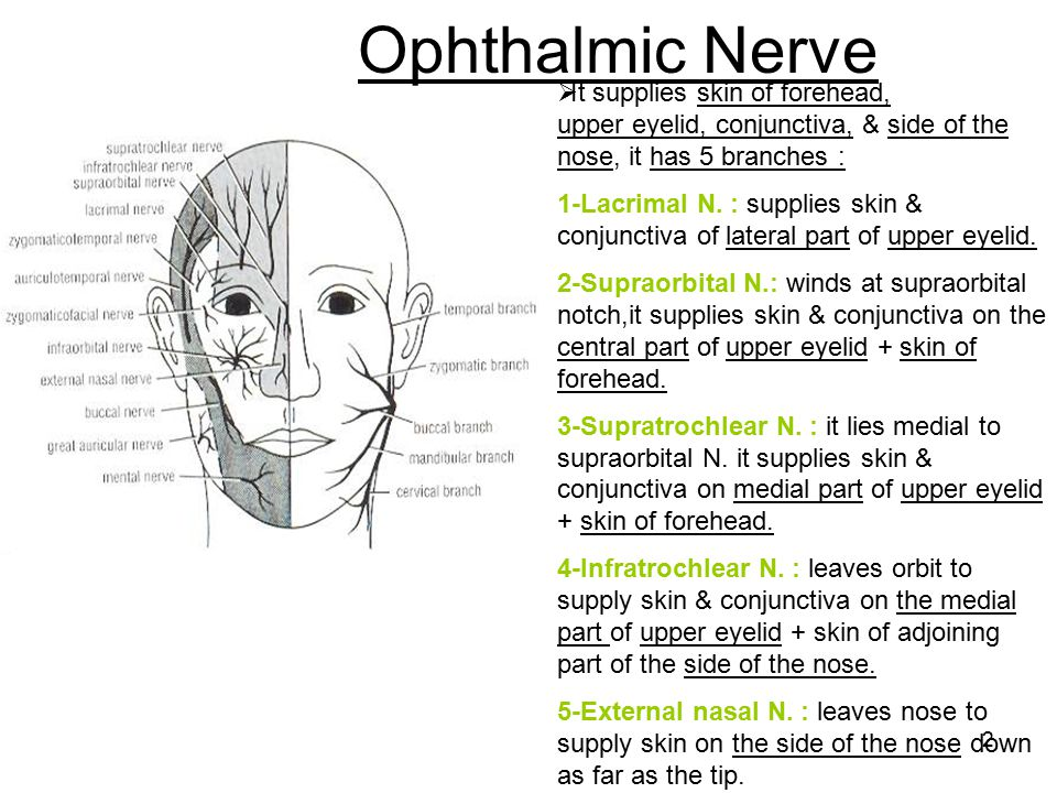 Ophthalmic Nerve It supplies skin of forehead, upper eyelid, conjunctiva, & side of the nose, it has 5 branches :