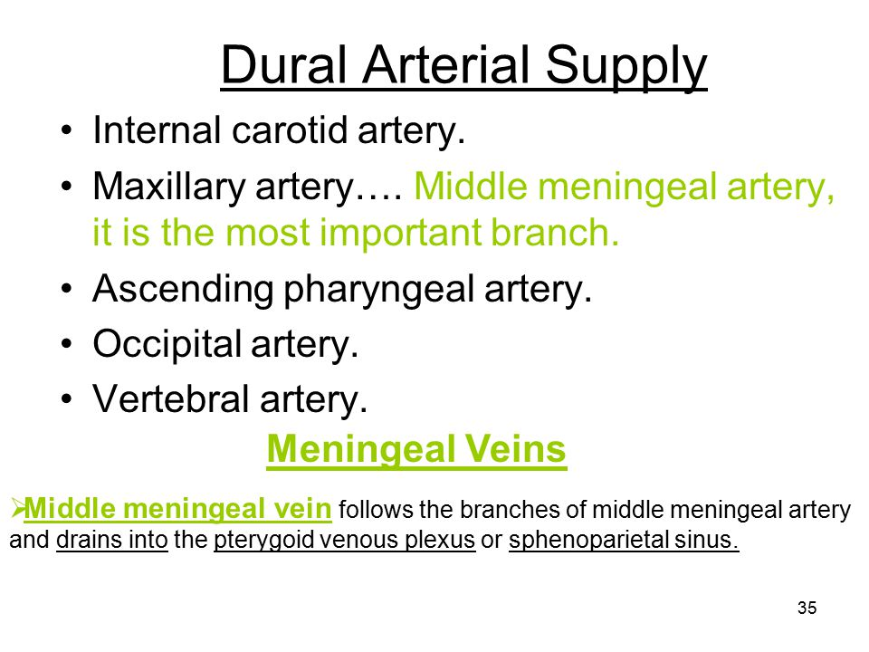 Dural Arterial Supply Internal carotid artery.