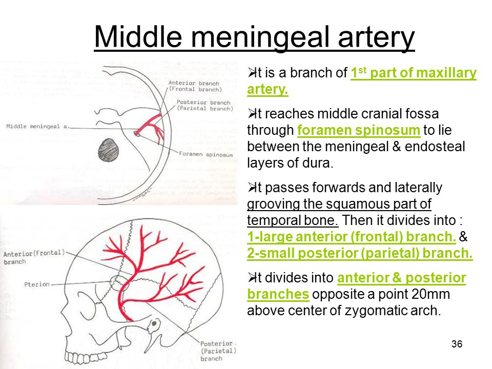Middle meningeal artery
