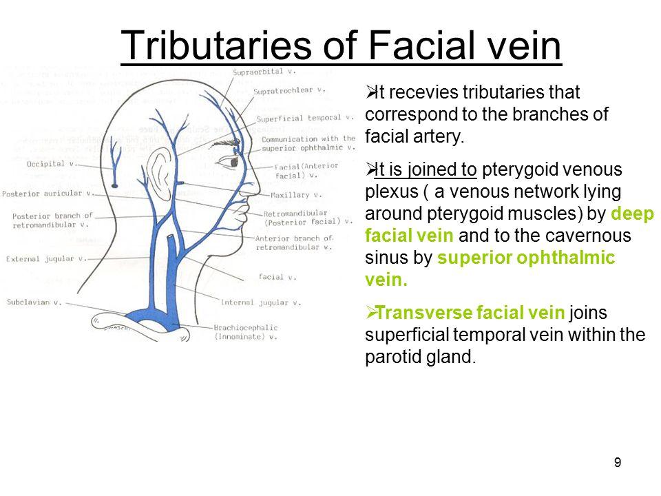 Tributaries of Facial vein
