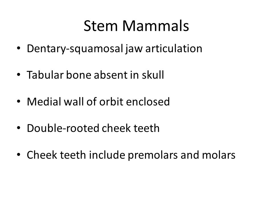 Stem Mammals Dentary-squamosal jaw articulation