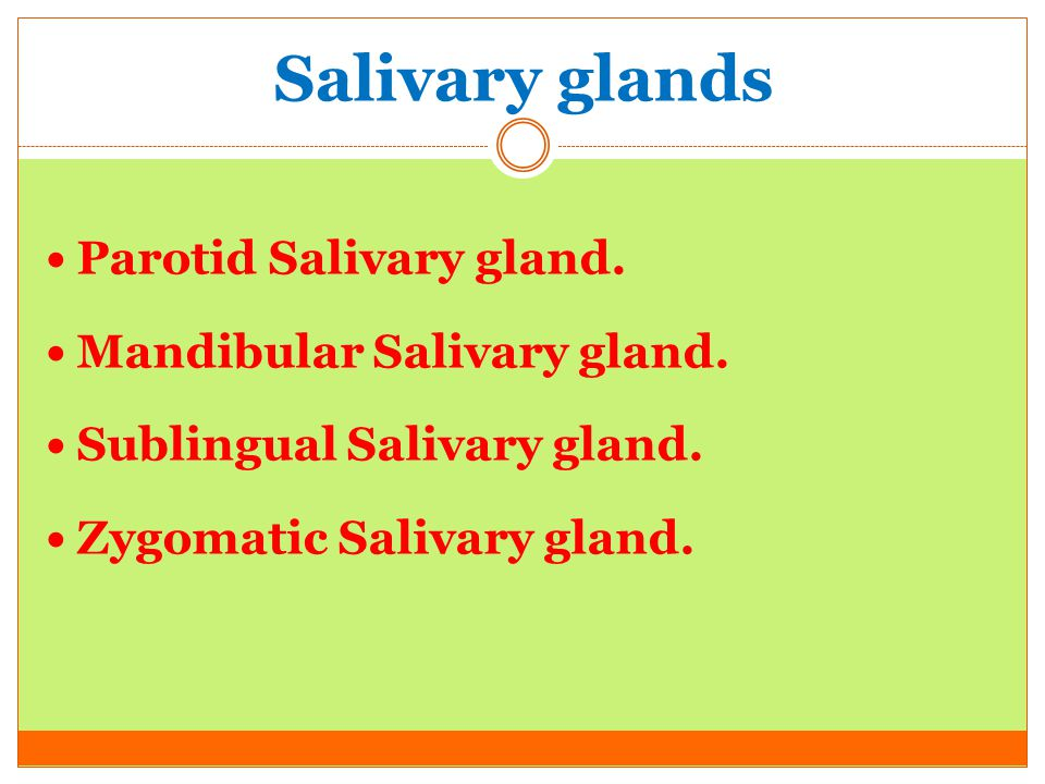 Salivary glands Parotid Salivary gland. Mandibular Salivary gland.