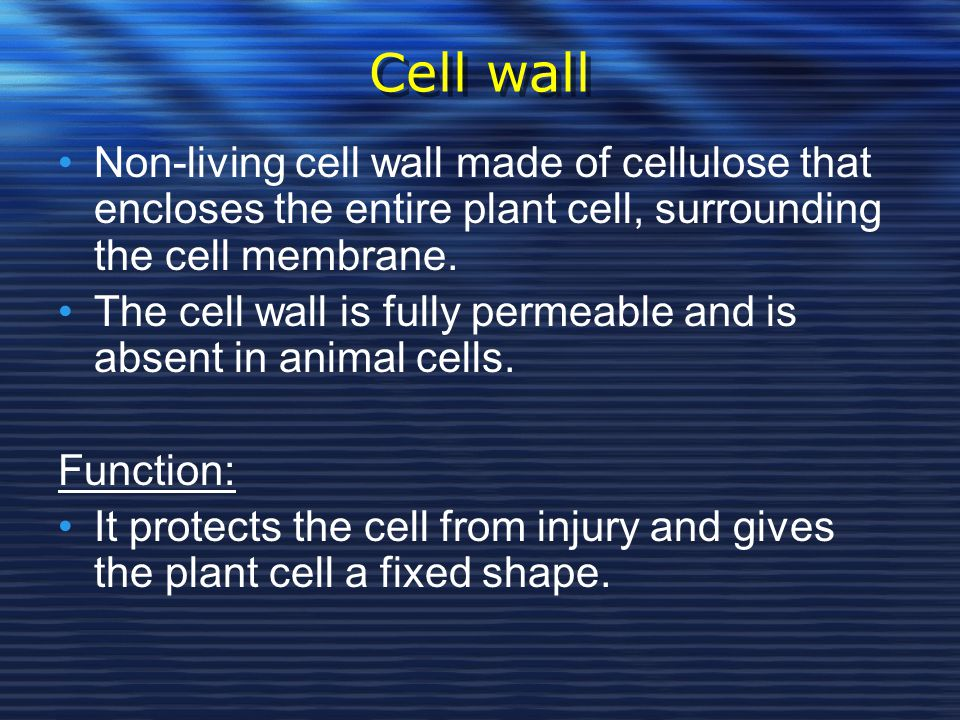 Cell wall Non-living cell wall made of cellulose that encloses the entire plant cell, surrounding the cell membrane.