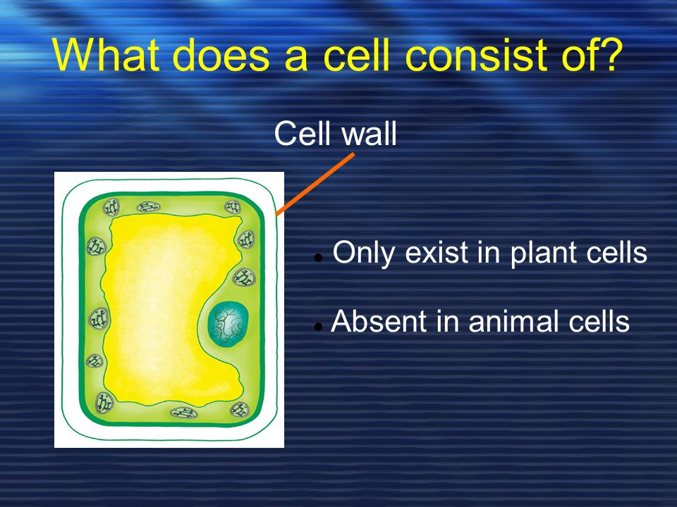 What does a cell consist of
