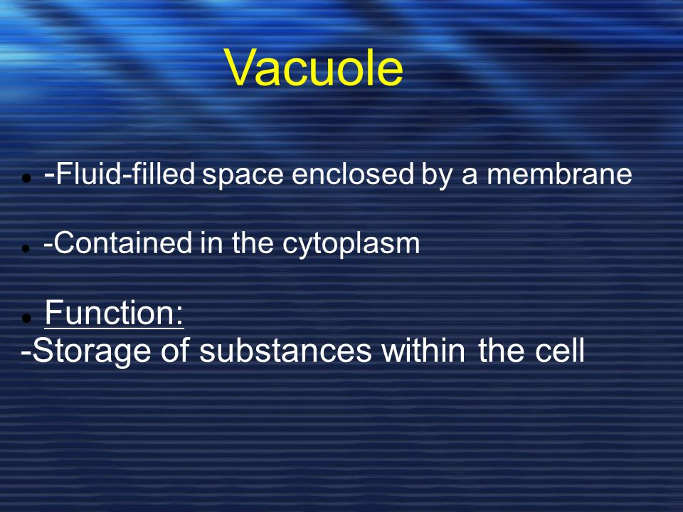 Vacuole -Fluid-filled space enclosed by a membrane Function: