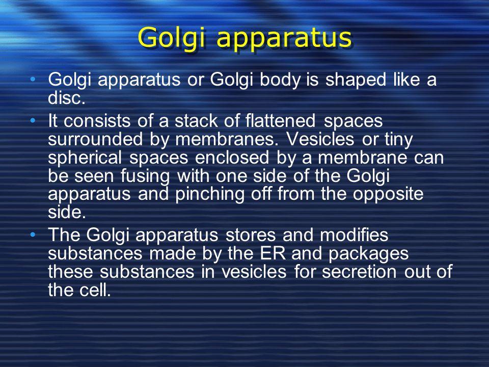 Golgi apparatus Golgi apparatus or Golgi body is shaped like a disc.
