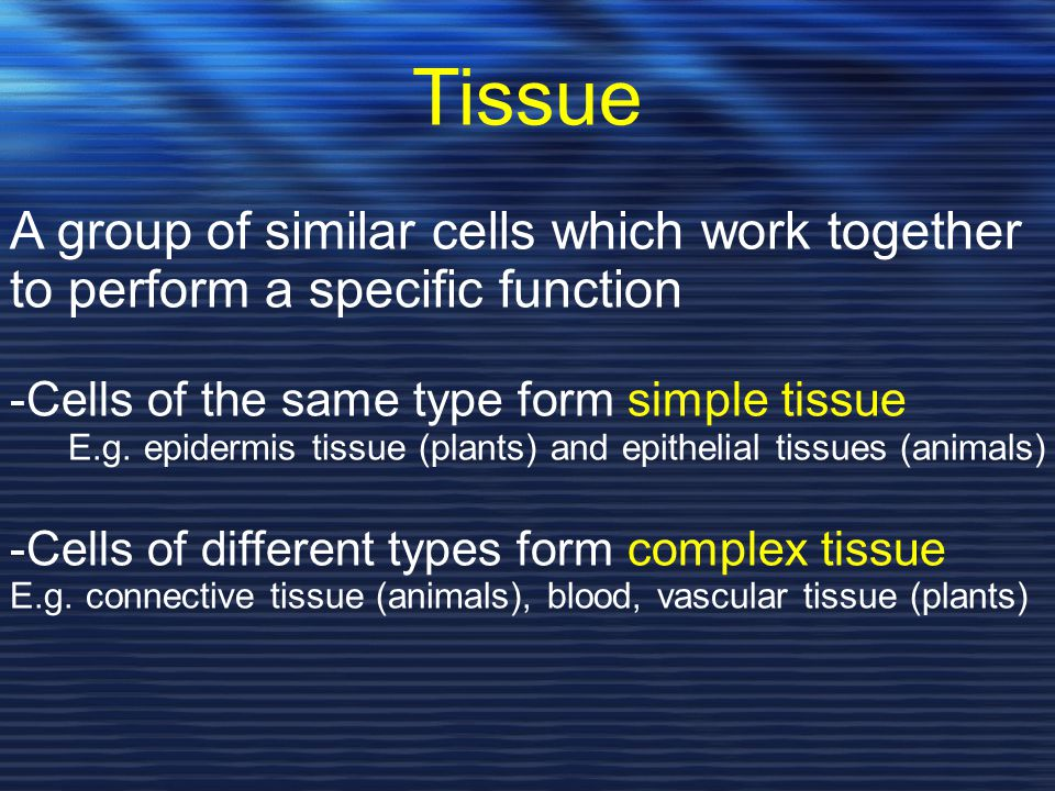 Tissue A group of similar cells which work together to perform a specific function. -Cells of the same type form simple tissue.