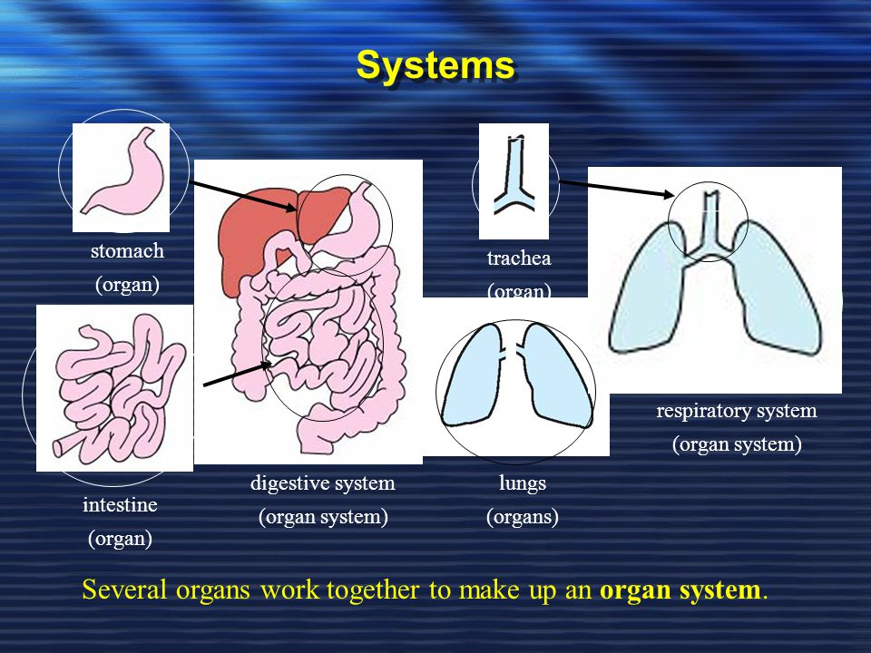 Systems Several organs work together to make up an organ system.