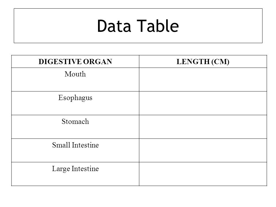 Data Table DIGESTIVE ORGAN LENGTH (CM) Mouth Esophagus Stomach