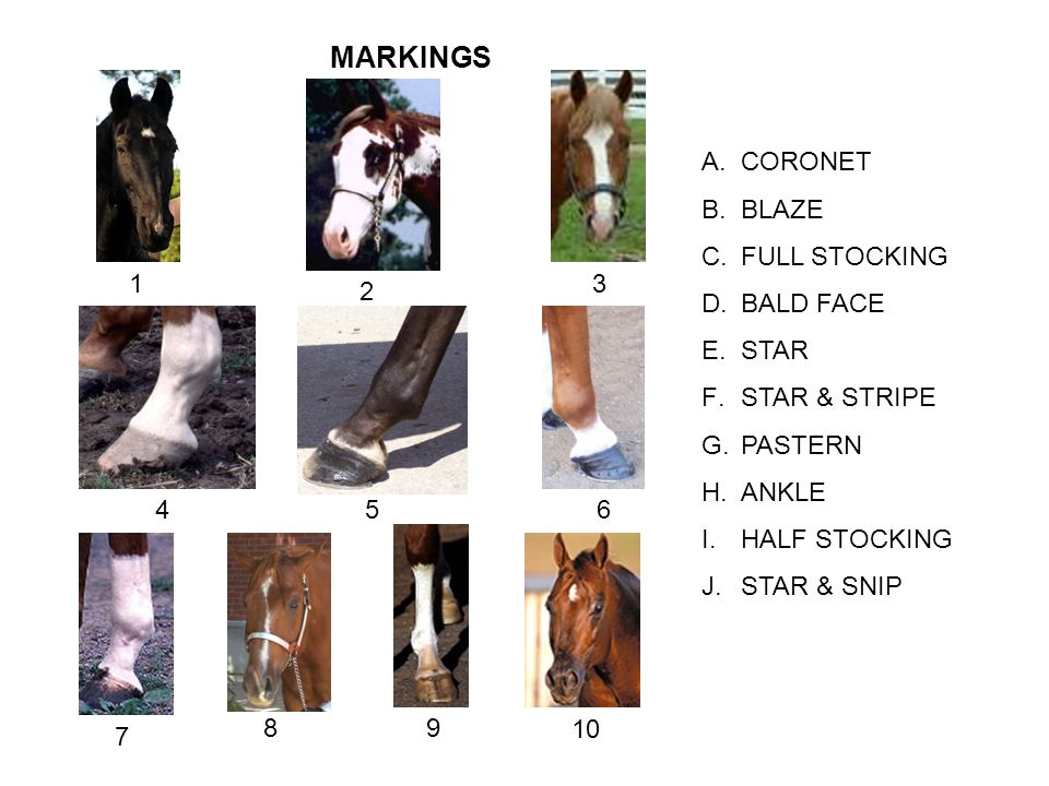 MARKINGS CORONET BLAZE FULL STOCKING BALD FACE STAR STAR & STRIPE