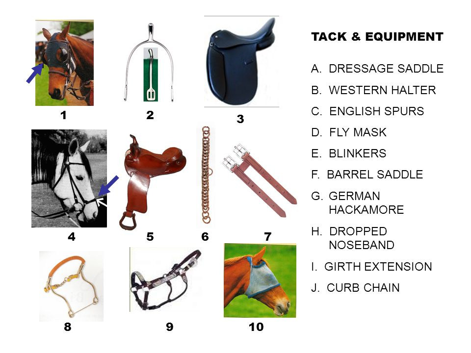 TACK & EQUIPMENT A. DRESSAGE SADDLE. B. WESTERN HALTER. C. ENGLISH SPURS. D. FLY MASK. E. BLINKERS.