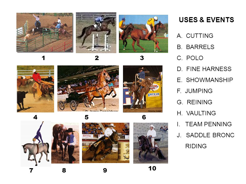 USES & EVENTS A. CUTTING B. BARRELS C. POLO D. FINE HARNESS