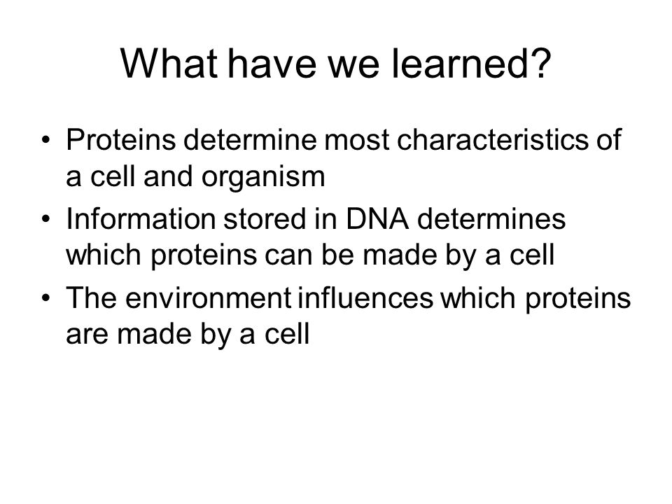 What have we learned Proteins determine most characteristics of a cell and organism.