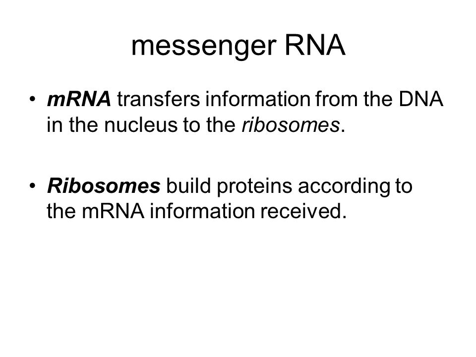 messenger RNA mRNA transfers information from the DNA in the nucleus to the ribosomes.