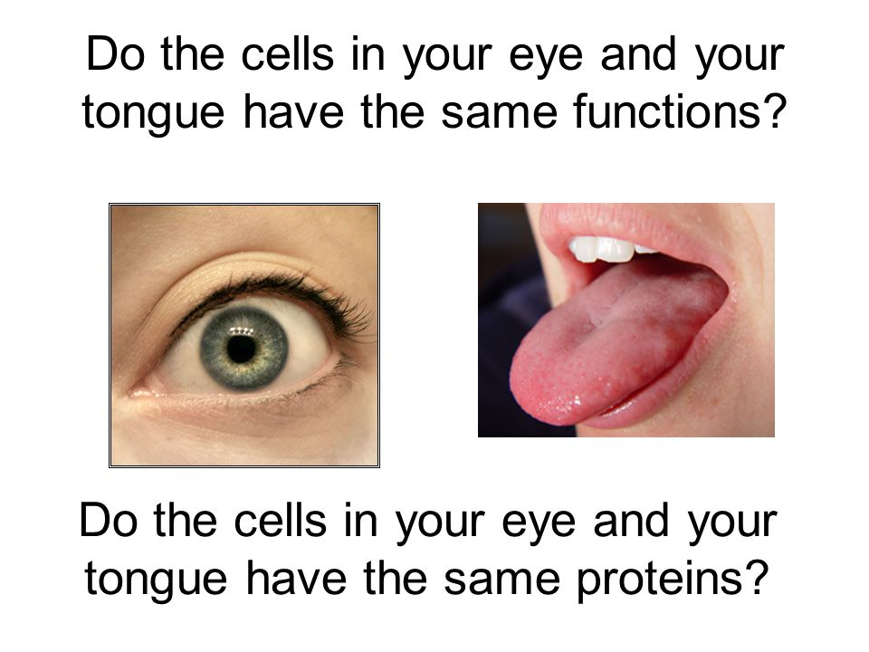 Do the cells in your eye and your tongue have the same functions
