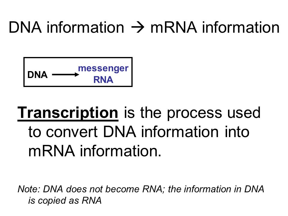 DNA information  mRNA information