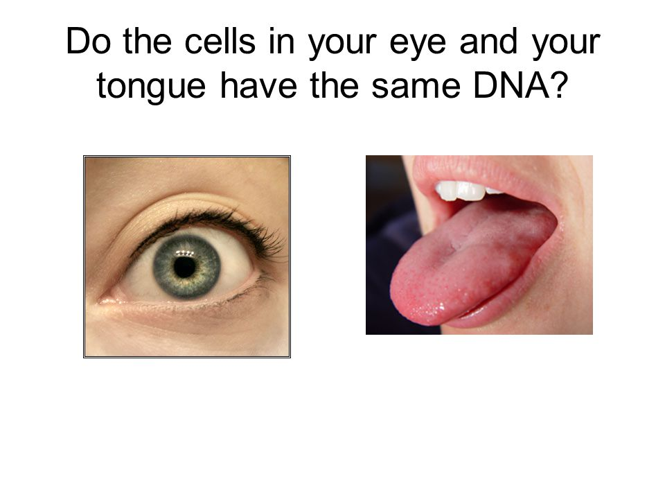 Do the cells in your eye and your tongue have the same DNA