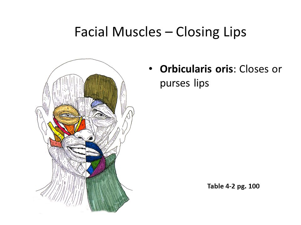 Facial Muscles – Closing Lips