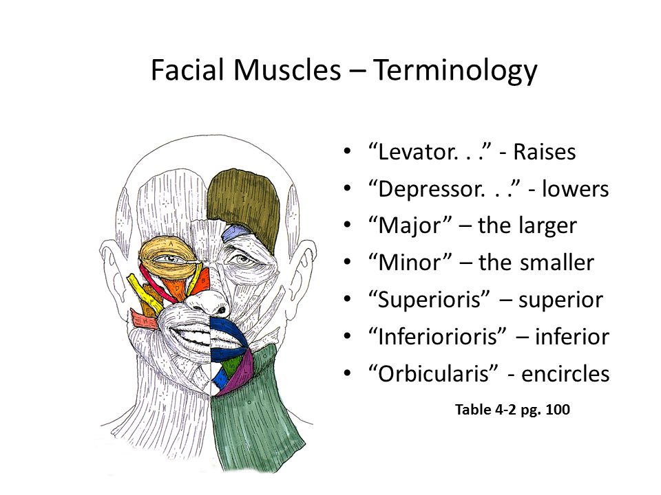 Facial Muscles – Terminology