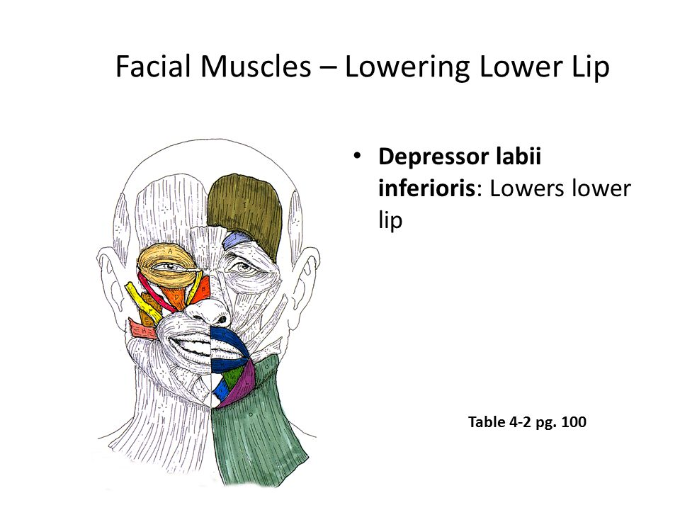 Facial Muscles – Lowering Lower Lip