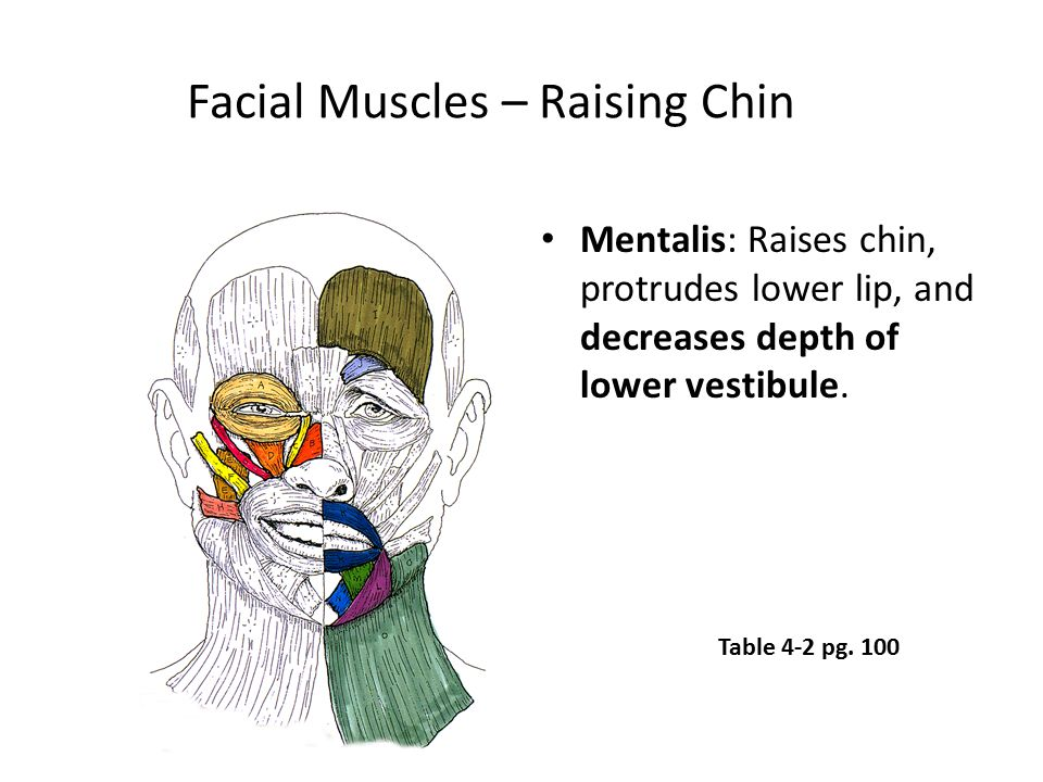 Facial Muscles – Raising Chin