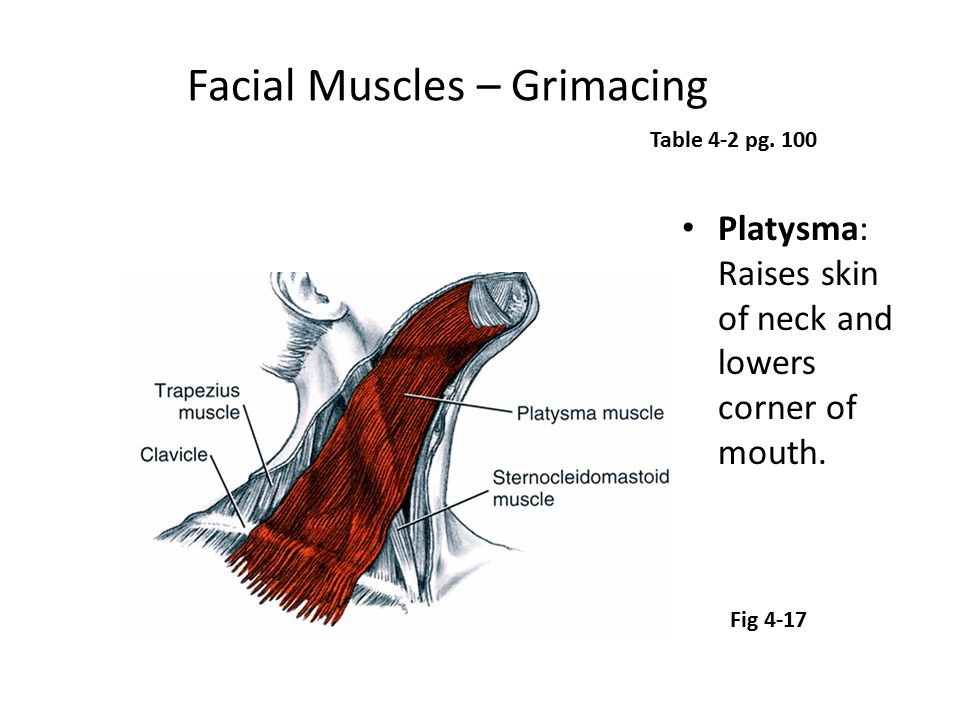 Facial Muscles – Grimacing