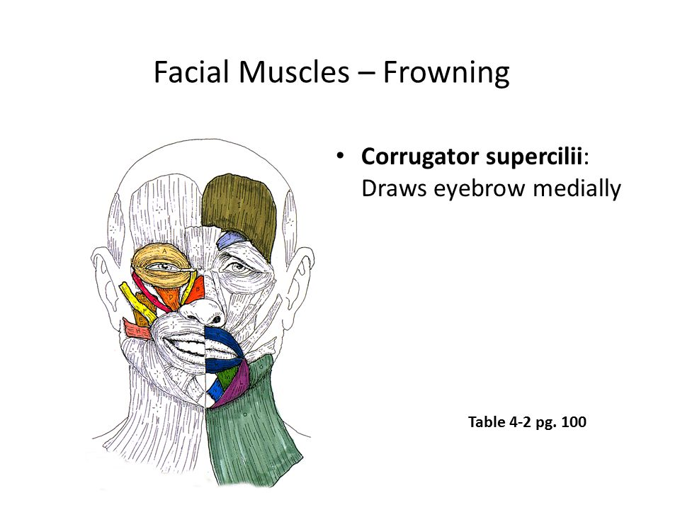 Facial Muscles – Frowning
