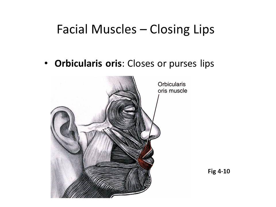 Facial Muscles – Closing Lips