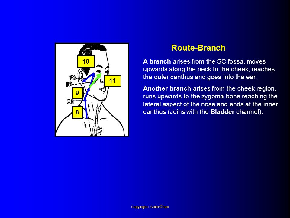 Route-Branch 10. A branch arises from the SC fossa, moves upwards along the neck to the cheek, reaches the outer canthus and goes into the ear.