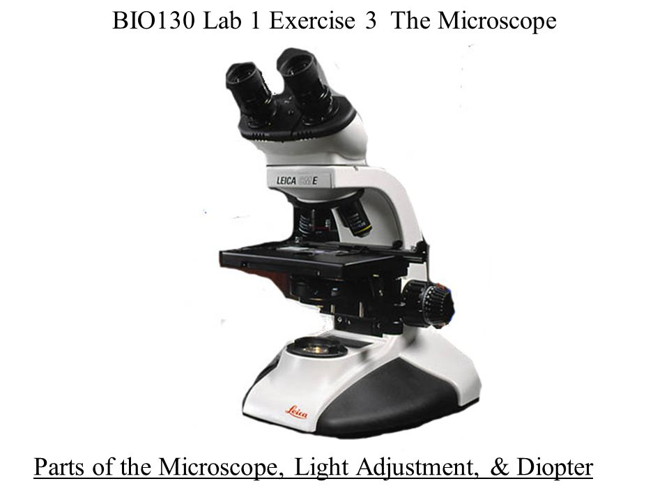 BIO130 Lab 1 Exercise 3 The Microscope