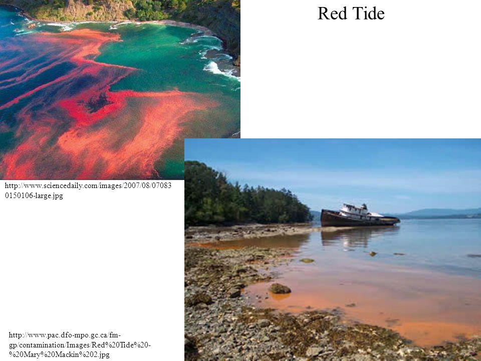 Red Tide http://www.sciencedaily.com/images/2007/08/070830150106-large.jpg.