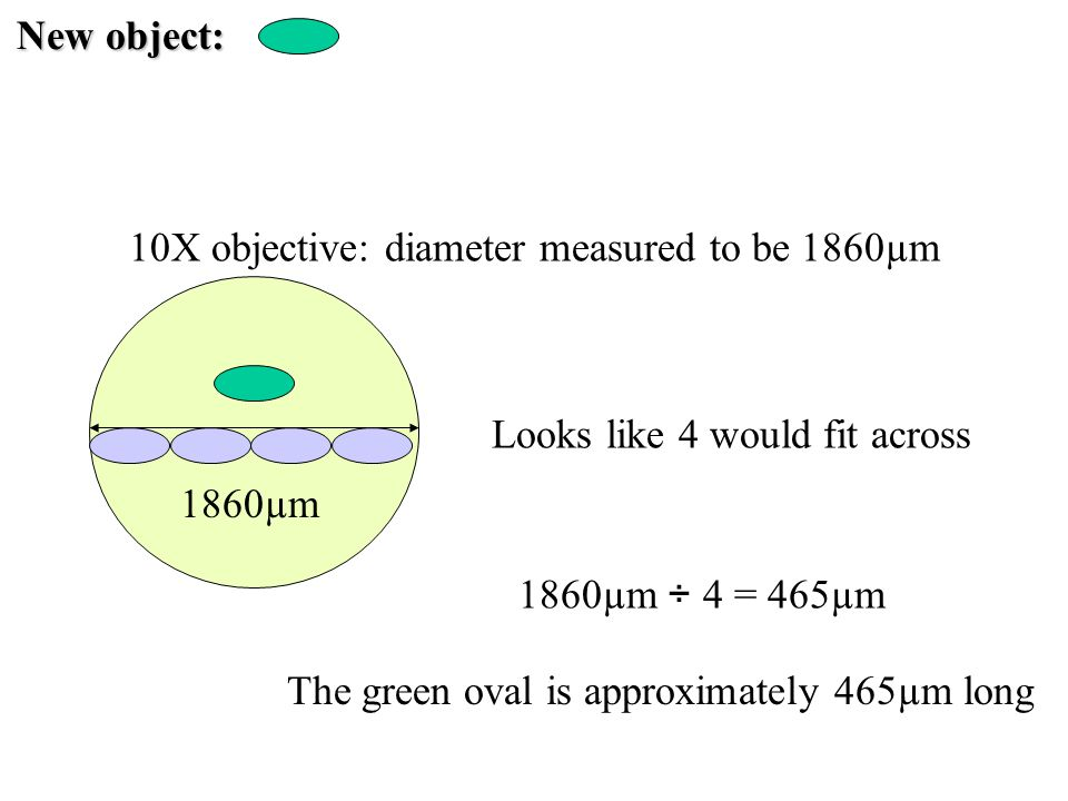 New object: 10X objective: diameter measured to be 1860µm. Looks like 4 would fit across. 1860µm.