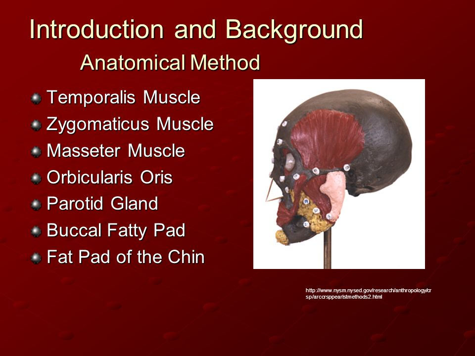 Introduction and Background Anatomical Method